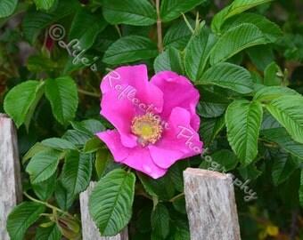 Flower Photography, Wildlife Photography, Nature Photography, Pink Flower Photo, Wall Decor, Fine Art