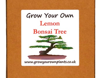 Grow Your Own Lemon Bonsai Tree Kit - Unusual Birthday or Christmas Gardening / Gardeners Gift