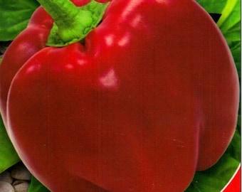 Sweet Pepper seeds Olenka Ukraine Heirloom Vegetable Seeds#701