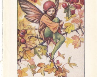 The  Original 1940's Hawthorn Fairy Print by Cicely Mary Barker from her book Flower Fairies of the Autumn