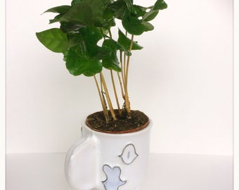 Porcelain coffee planter