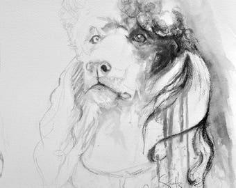 Gray Standard Poodle Fine Art Print