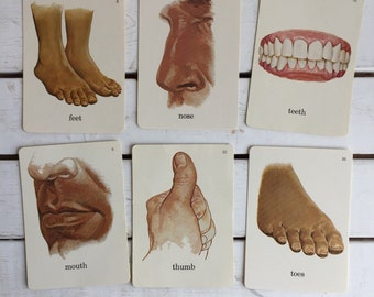 Vintage Flash Card Body Parts / 70's Flash Cards