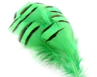 3.5 Inch Green Lady Amherst Feathers (10) Green Feathers. Green Pheasant Feathers for Hat Bands. Green Bird Feather for Masks. Short Feather