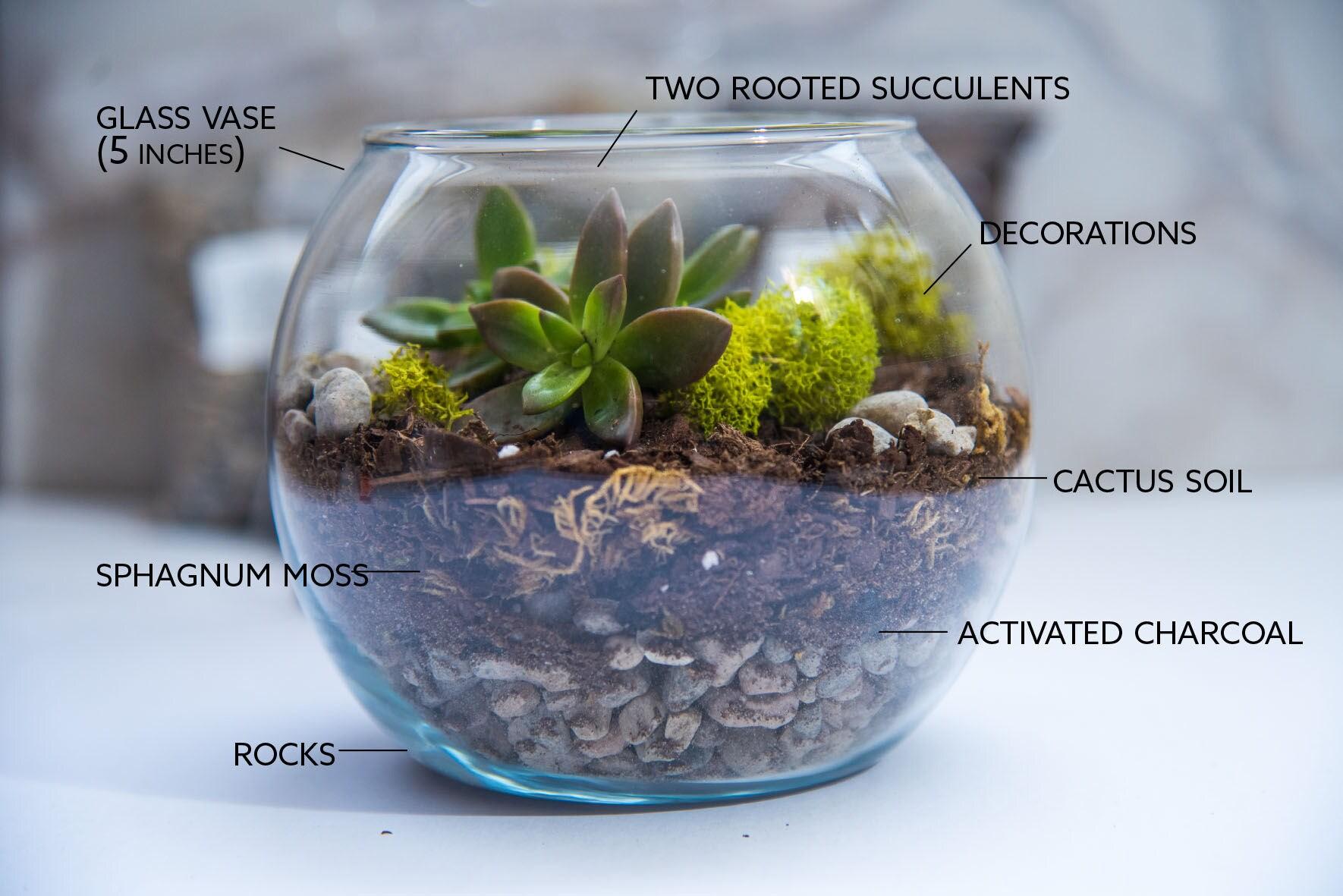 succulent terrarium kit medium terrarium gift succulent terrarium gift ideas miniature. Black Bedroom Furniture Sets. Home Design Ideas