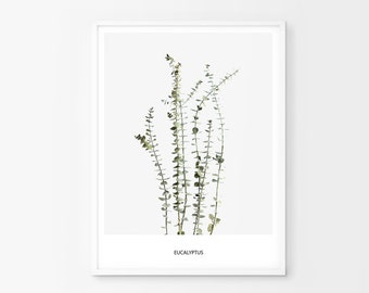 Eucalyptus Print, Eucalyptus Wall Art, Eucalyptus Photography, Eucalyptus Decor, Eucalyptus Printable, Eucalyptus Art, Eucalyptus Poster