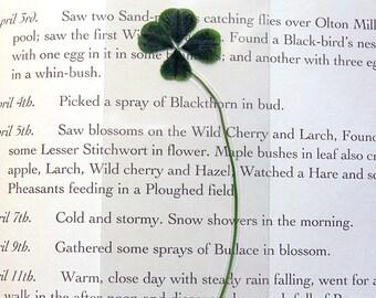 REAL Laminated 4-Leaf Clover Bookmark, Trifolium Repens Purpureum, Keepsake Four Leaf Clover Bookmark, Chocolate Clover