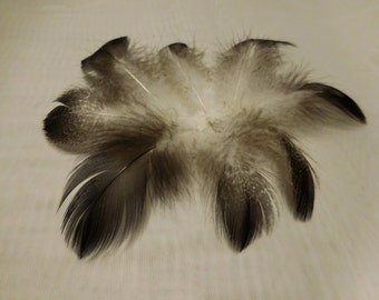 Black and White Feathers, Humane Feathers, Craft Feathers, Natural Feathers, Speckled Feathers