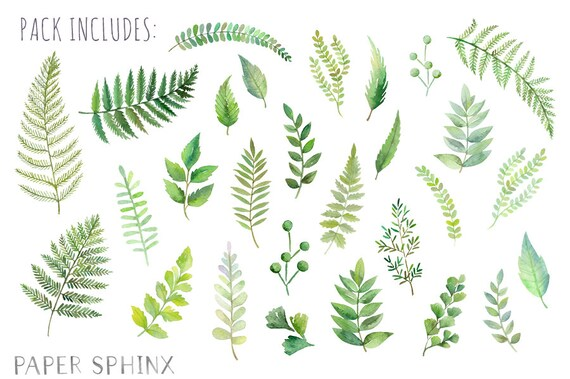 Watercolor Ferns Clipart Forest Leaves Clipart