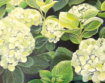 White Hydrangia Blooms Floral Original Oil Painting