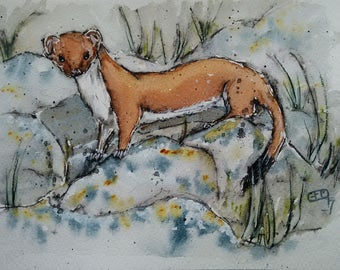 Stoat art, stoat painting, original watercolour painting, wildlife art weasel painting, The Inquisitive Stoat by EdieBrae