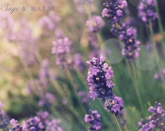 Purple French lavender bokeh romantic nature photography print, spring summer nursery decor, wedding gift ideas mothers day bridal shower