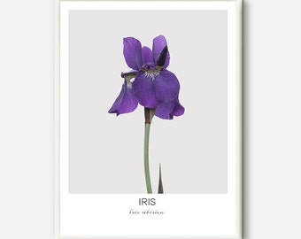 Blue Iris Print, Iris Photography, Spring Flower Art, Green Nature Photo, Blue Floral Poster, Minimalist Flower, Purple wall art, Botanical