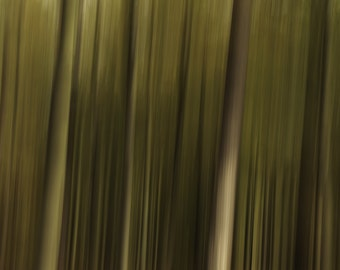 Picture of trees, Abstract,landscape, Fine Art Print, Wall Pictures, Shoreline Fine Art, Picture of Forest, Woodland Photography