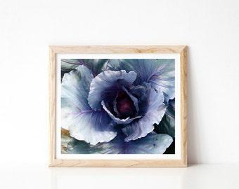 Cabbage Photo - Stock Photograph, Printable Wall Art, Cabbage, Stock Photo, Nature Photography, Nature Photo, Farm Photo, Home Wall Art