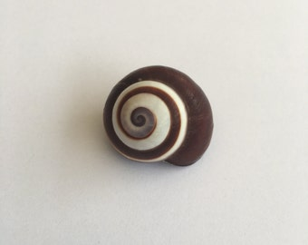 Hermit Crab Shells 1.5-2cm Land Snail Brown and White Swirl Shell