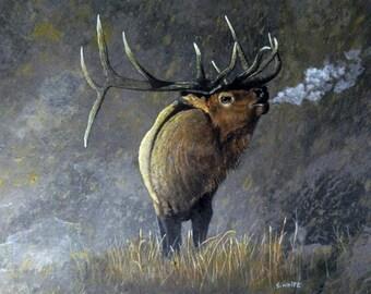 Elk by Stan White- Print