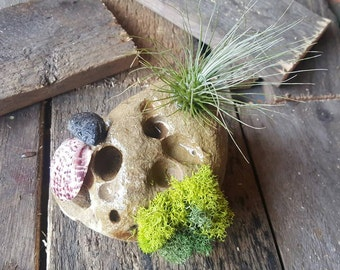 Ocean Rock with Air Plant