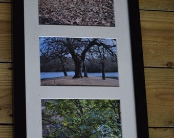 """Framed Tree and Leaves Photo Triptych - 3 6x4"""" Prints, 17x9"""" Frame"""