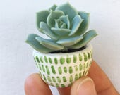 Tiny succulent planter pots, GREEN/WHITE baby succulent/cactus pot flower pot with saucer