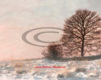 Winter Sunset at Bradgate Park