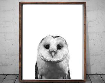 Owl Print, Animal Print, Animal Print Nursery, Owl Wall Art Decor, Nursery Animal Prints, Black White Bird, Bird Art Photography, Owl Decor
