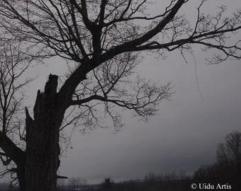 Oak Field,  forest, woods, countryside, tree, trees, snow, winter, landscape, original art, upstate New York