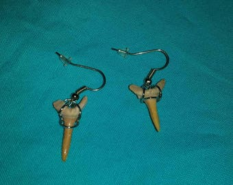 Shark tooth earrings - shark tooth jewelry - fossil