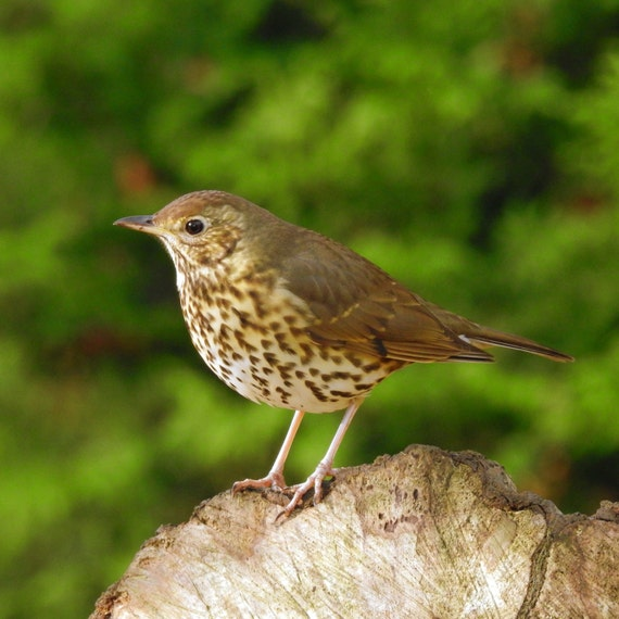 bird on a tree stump