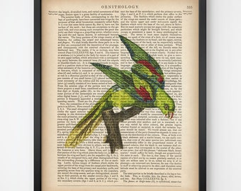 Print on dictionary, Dictionary art print, Bird vintage print, Bird art print, Instant download printable art, 8x10 print, 11x14 pint, JPG