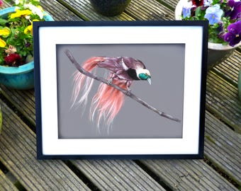 Bird of Paradise Print. Hand Drawn and Painted.