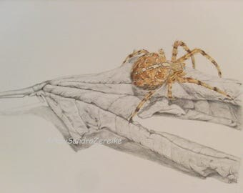 """Drawing cross spider on a withering leaf original pencil drawing  colored pencil animal picture spider 8 x 11,6"""" / ArtbySandraZereike"""