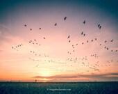 Sunset, birds, west dyke, Richmond, BC, Canada, Cityscape Photography, Fine Art Photo, Wall Art, Landscape Photos