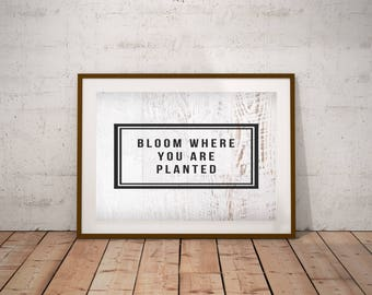 Bloom where you are planted | 8x10