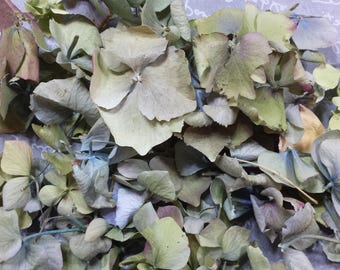 SAMPLE: 100% Real Freeze Dried Hydrangea Petals (1 Cup)