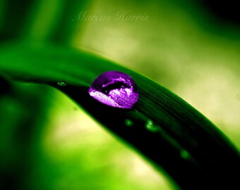 Purple Rain Drop