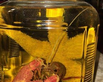 Star Fish & Crawdad Wet Specimen