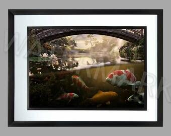 Koi . A3 Print . Poster image . Fish Keeping
