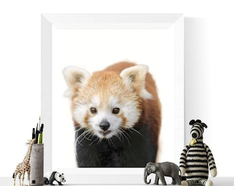 Panda Prints | Red Panda Photograph Printable | Nursery Art | Instant Download | Panda Art | Red Pandas | Animal Printables