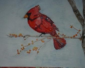 Bittersweet Cardinal