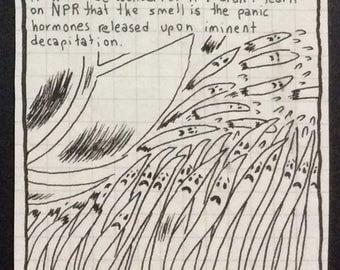 Panic Grass