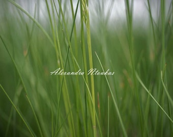 Green Blades of Grass Meadow Digital Print Download