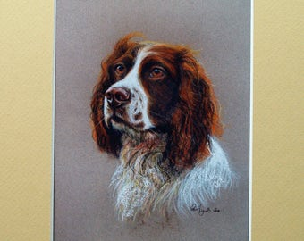 Mounted Print of a Springer Spaniel