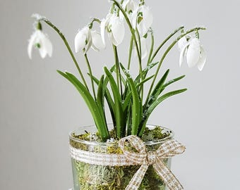 Snowdrops in the glass, new year's day, gift, Christmas