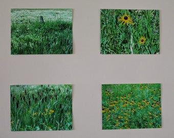 Green and Yellow Saskatchewan Prairie Grouping of Photographs