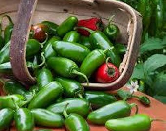 Jalapeno Pepper Seeds, FREE Shipping, 30 seeds, Rabbit Rescue Donation