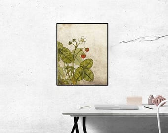 Strawberries, wild strawberries, kitchen art, wall poster, flower print, Kitchen decor, home decor