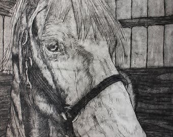 Wesley GBT Haflinger Horse, Limited Edition 2 of 4 Aquatint Copper Plate Etching