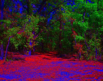 Instant Download, Psychedelic Forest, Nature Photography, Art, Woods, Trees, Grass, Nature, Florida, March, Stock photography, Stock photo