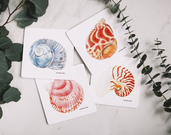 Seashell Drink Coaster Set